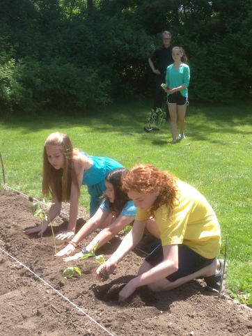 planting sunflowers confirmation students